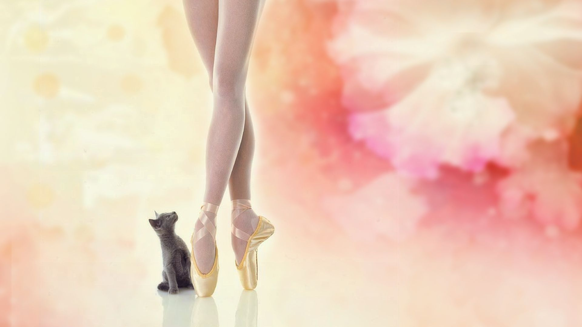 Download Wallpaper Artistic Ballerina With Tags Flower Beautiful Cat Linux Macos Macbook Pro Kitten Ballerina Chaton