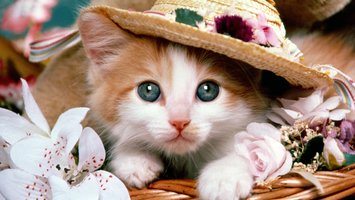 Download wallpaper with animals Cats
