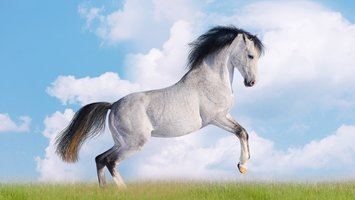 Download wallpaper with animals Horse