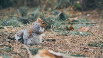 Download wallpaper with animals Squirrel
