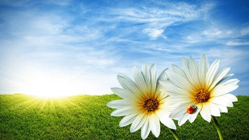 Download wallpaper artistic Flower
