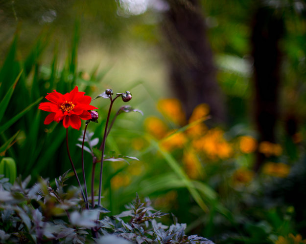 Download Wallpaper From Earth Nature Flowers With Tags Flower