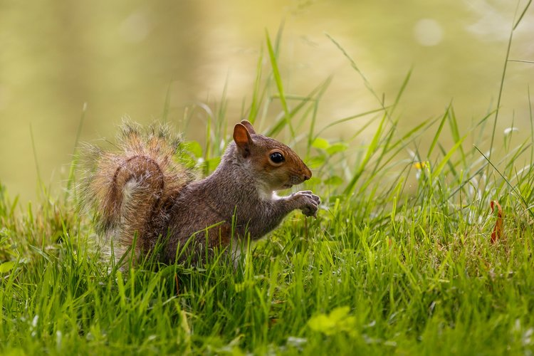 Download Wallpaper With Animals Squirrel With Tags Windows 10