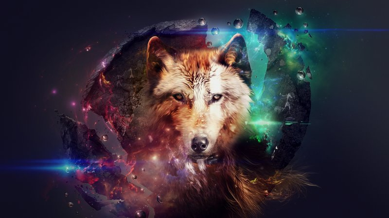 Download wallpaper with animals Wolves