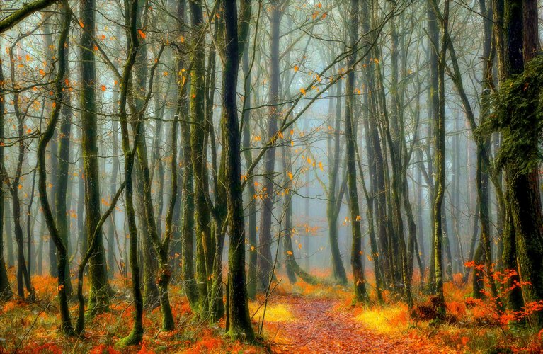 Download wallpaper from Earth Nature Forest with tags: Free